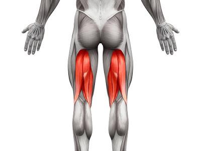 Isquiotibiales, músculos desconocidos salvo que tengas agujetas en ellos
