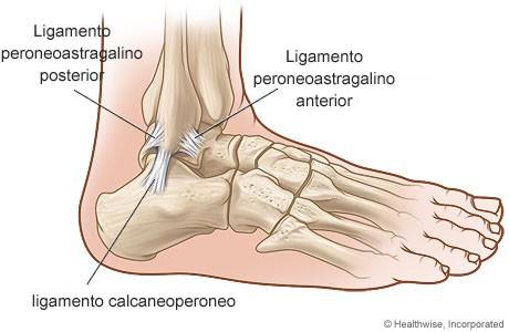 esguince tobillo ligamentos afectados